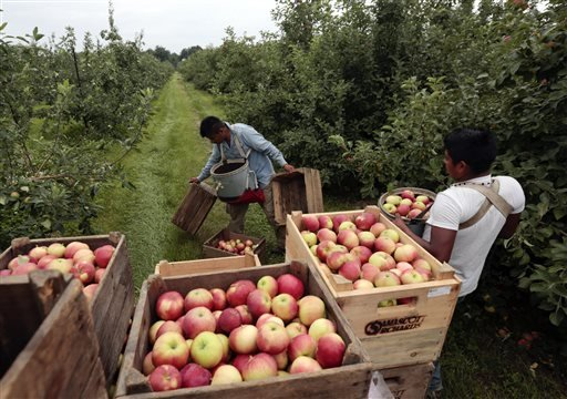 FILE - In this July 9, 2015 file photo, workers harvest early apples at Samascott Orchards in Kinderhook, N.Y. The Commerce Department releases second-quarter gross domestic product on Thursday, Aug. 27, 2015. (AP Photo/Mike Groll, File)