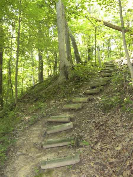 photo of path up through the Forest Glen Preserve